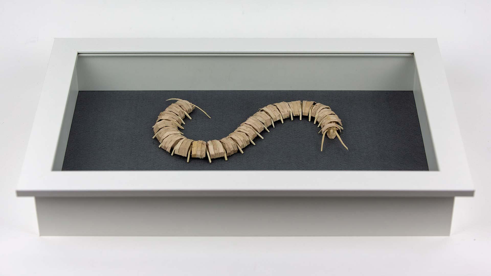 Centipede Future Fauna