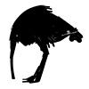 Ostrich Future Fauna